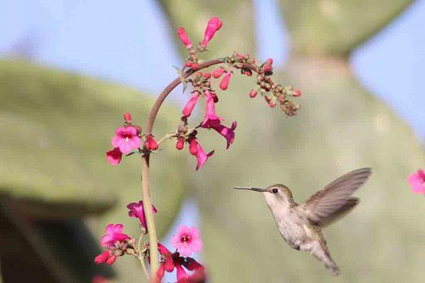 hummingbird in our garden